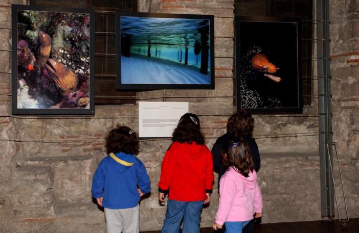 exhibition stars of underwater-006