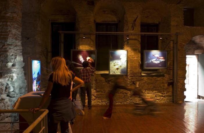 exhibition stars of underwater-002