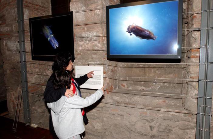 exhibition stars of underwater-007