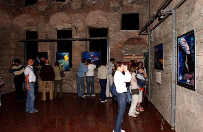 exhibition stars of underwater-009